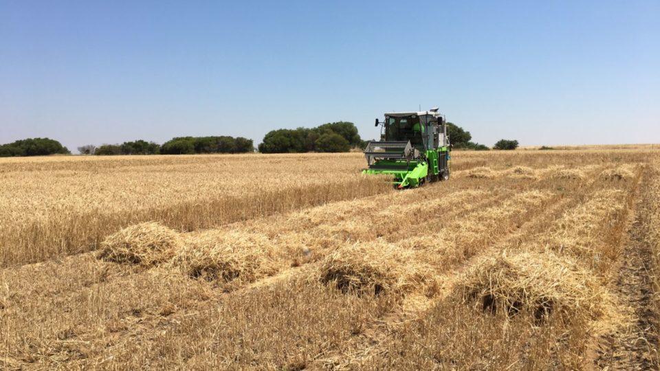 Plot harvester havesting biochar trials