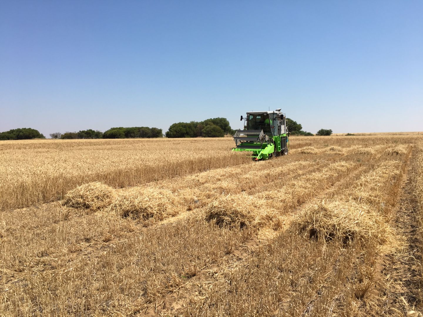 Plot harvester havesting biochar trials