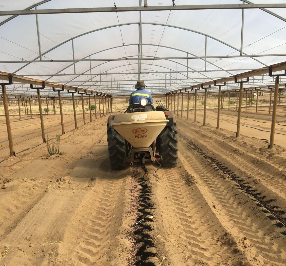 Spreading biochar under a greenhouse using a mechanical spreader